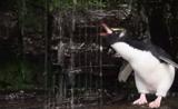 مقتطفات رائعة ومضحكة لجميع الحيوانات