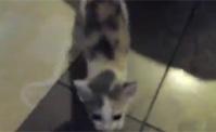 القطة المجنونة