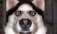 كلب مع صوت غريب