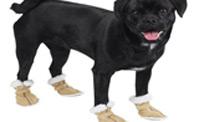 الحذاء المميز