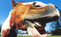 ضحكه الحصان