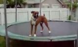 الكلب المجنون