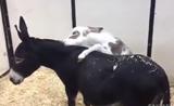 مقاطع مضحكة لأحلى الحيوانات
