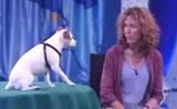 موهبة عبقرية للكلب قبالة  الحيوانات الأليفة في برنامج المواهب