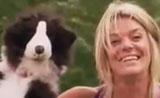 دمية على شكل كلب تهاجم كلب حقيقي